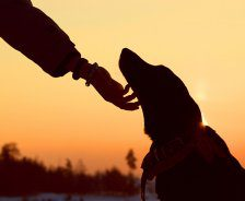 A hand extends to scratch a dog under the chin with the sun setting behind.