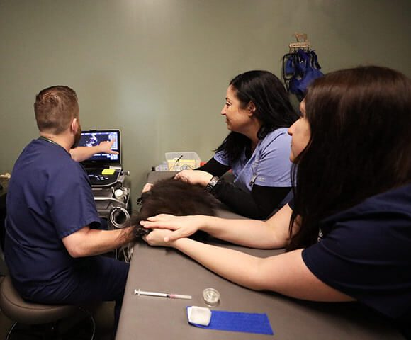 A veterinary team performs an ultrasound on a small black dog.