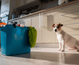Dog sits on the floor of kitchen with blue mop bucket filled with cleaning products.