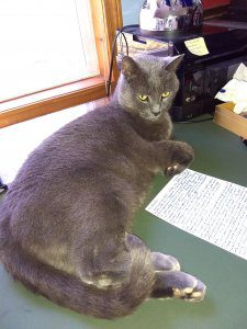A grey cat sits on a desk by a sheet of paper.