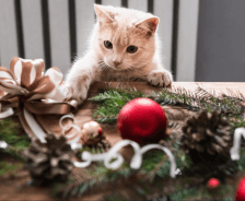 Cat tries grabbing Christmas decoration off table.
