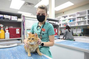 A blond vet tech in green scrubs holds and orange tabby cat.