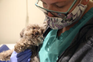 A masked technician holds a curly haired dog next to her.
