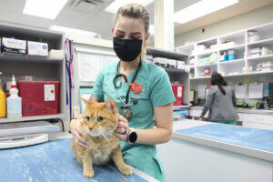 A masked vet tech holds an orange cat on the counter.