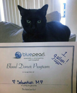 A black cat sits behind a blood donor certificate
