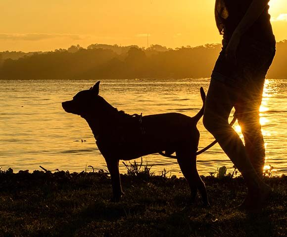 A silhouette of a dog and its owner at the water's edge