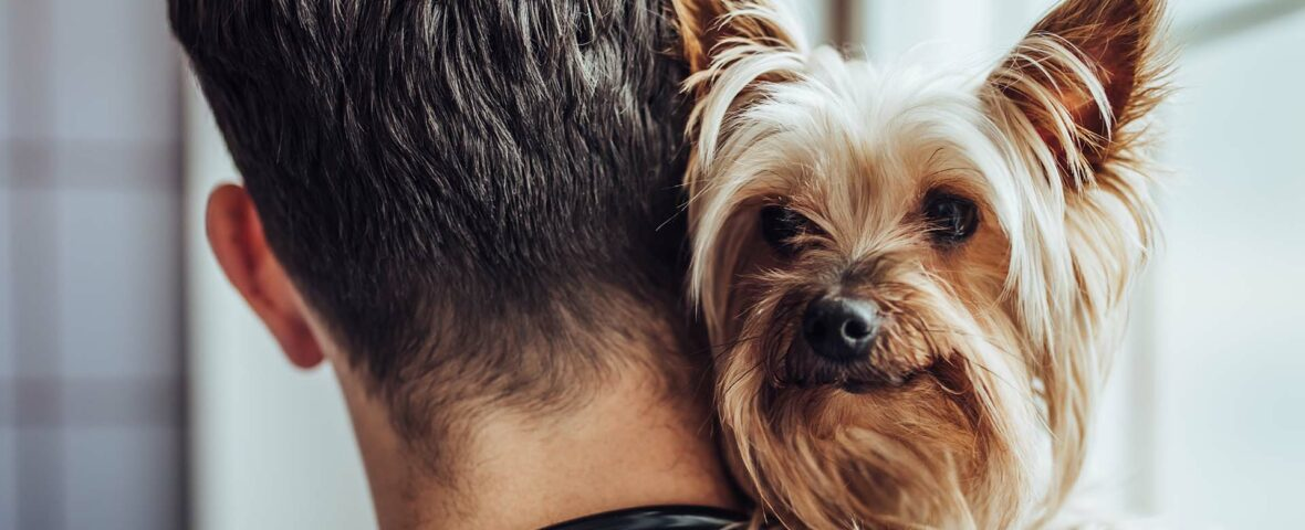 A veterinarian holds a Yorkie dog on his shoulder.
