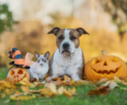 cat and dog sit outside near pumpkins