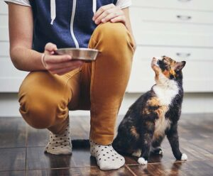 A cat is given a bowl of food by its owner