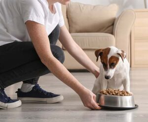 An owner gives their dog a bowl of food.