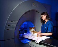 A dog is prepared for a CT scan.