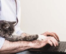 A cat stretches its paws over a human's hands, which are typing on a laptop