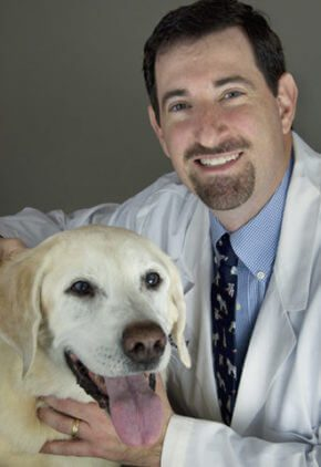 Dr. Alan Spier is board certified in veterinary cardiology. He is sitting with an almost white Labrador retriever.