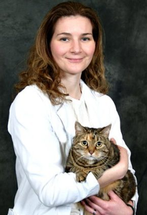 Dr. Rebecca Newman is board certified in veterinary oncology. She is holding a tabby cat.